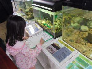 生き物探し @ 水環境館 | 北九州市 | 福岡県 | 日本