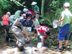 「水生昆虫ヒメドロムシ、GETだぜ!!」 @ 河原橋 | 北九州市 | 福岡県 | 日本